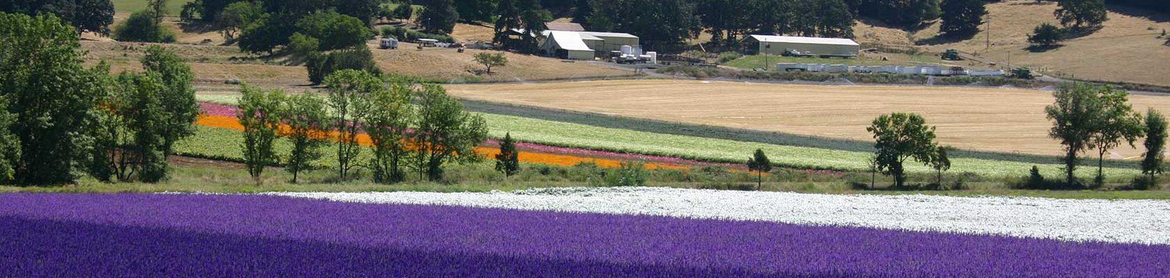 Oregon Flower Seed