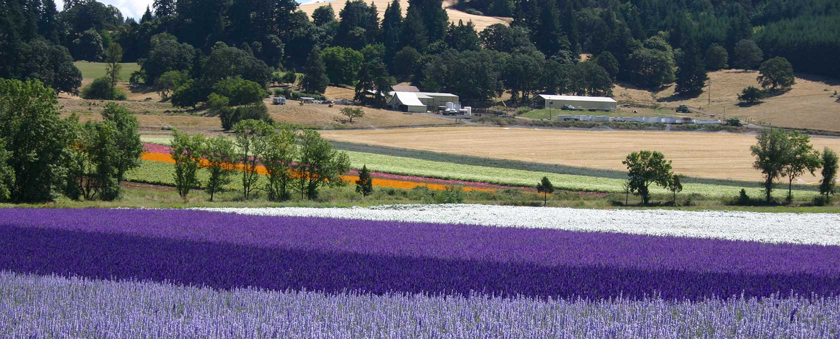 Oregon Flower Seed Flower Species Flower Seed Mixes